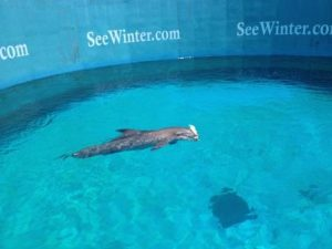 Winter, The Dolphin
