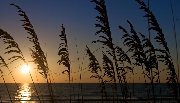 Sea Oats in Honeymoon Island Florida with dramatic sunset in the background.